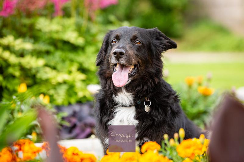 Pet photographer Aberdeenshire