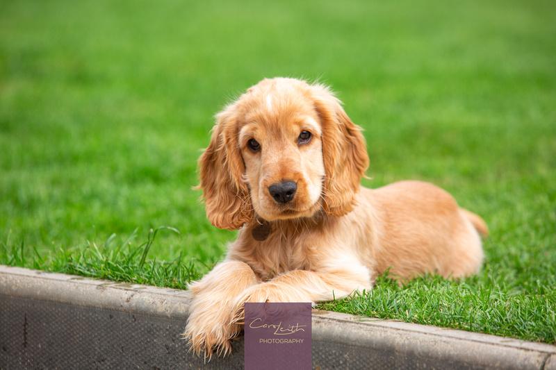 Aberdeen Pet photographer