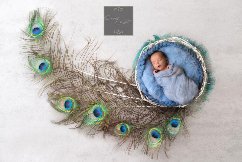 PeacockEtsydigitalbackdropNewborn